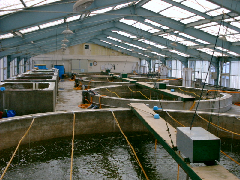 Recirculating Shrimp Hatchery, Wikicommons
